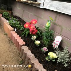 水性塗料/お花/花壇/ダイソー 花壇にお花植えました🤗 …どこが違うでし…