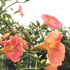 雨の日のお花 雨でもいいかな。 (6枚目)