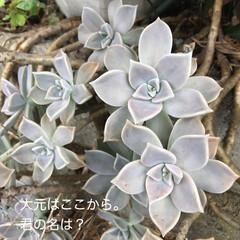 多肉棚 朝からDIY🤗  下の花壇→地植え用にと…(3枚目)