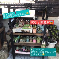 多肉棚/DIY 梅雨の合間に少しづつ…屋根つけたぁ🙌🏻 …(6枚目)