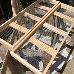 多肉棚/DIY 多肉棚板を網に変えようかと考えたけど、 …(4枚目)