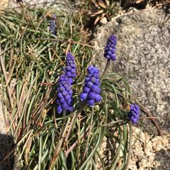 春ですね/公園へお散歩 ふきのとうとてんとう虫♡ ・・・とお花た…(4枚目)