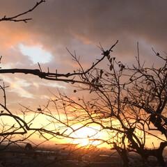 夕暮れ/ビオラ ビオラ植えました🤗黄色はパンジー。 ・・…(5枚目)