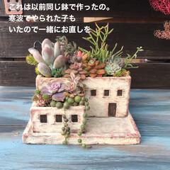 リメ鉢/DIY/多肉植物 こんなハートワイヤーも出来るって 知らせ…(5枚目)