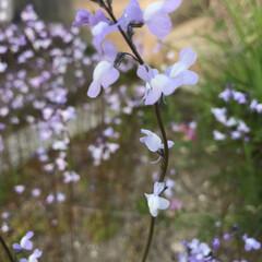 春の花/柴犬/DIY一輪挿し お花の投稿をしようと思ったら… すまして…(8枚目)