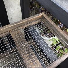 多肉棚/DIY 多肉棚板を網に変えようかと考えたけど、 …(6枚目)