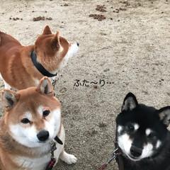 お正月/柴犬/わんこ同好会/DIY 明けましておめでとうございます🎍🤗🎍 今…(4枚目)