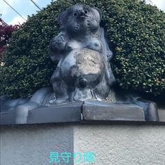 柴犬/お散歩 お散歩珍道中🐕🐕🐕(3枚目)