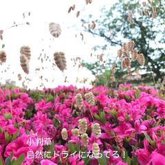 自然 今日のほっこり(*´˘`*)(5枚目)