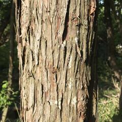 木の表情 十人十色( ¨̮ )︎︎ 木だって色んな…(7枚目)