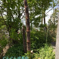 柴犬/お散歩 お散歩珍道中🐕🐕🐕(8枚目)