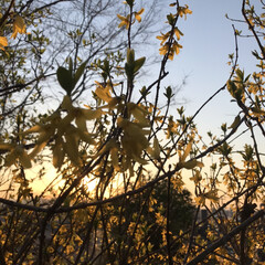 夕日とお花 今日の夕日と…(7枚目)