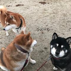 お正月/柴犬/わんこ同好会/DIY 明けましておめでとうございます🎍🤗🎍 今…(3枚目)