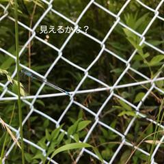 自然 今日のほっこり(*´˘`*)(4枚目)