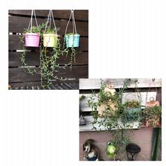 リメ缶/DIY/多肉植物 我が家のネックレス・.。*・.。* ②D…(3枚目)