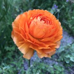 春の花/柴犬/DIY一輪挿し お花の投稿をしようと思ったら… すまして…(4枚目)