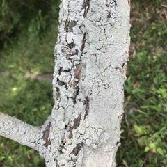 木の表情 十人十色( ¨̮ )︎︎ 木だって色んな…(9枚目)