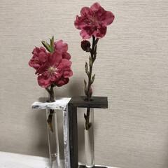 お花/ピンク/ダイソー/DIY/雑貨/試験管リメイク/... 試験管リメイク→ ダイソーさんの試験管セ…