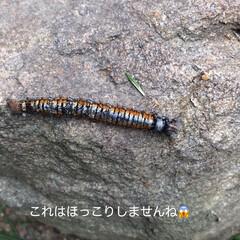 自然 今日のほっこり(*´˘`*)(6枚目)