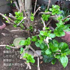 多肉棚 朝からDIY🤗  下の花壇→地植え用にと…(6枚目)