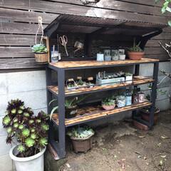 サボテンの成長/波板/多肉棚/DIY 屋根を付けてみました。ちょっと想定外💦 …