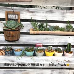 多肉棚 朝からDIY🤗  下の花壇→地植え用にと…(4枚目)