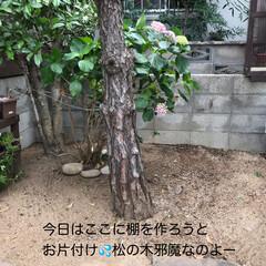 自然 今日のほっこり(*´˘`*)(9枚目)