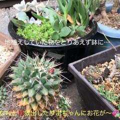 自然 今日のほっこり(*´˘`*)(10枚目)
