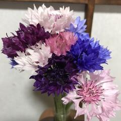 春の花/柴犬/DIY一輪挿し お花の投稿をしようと思ったら… すまして…(2枚目)