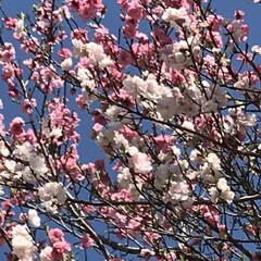 春の花/柴犬/DIY一輪挿し お花の投稿をしようと思ったら… すまして…(9枚目)