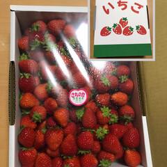 イチゴ/多肉植物 🍓の日! ①先日大きなイチゴもらって、そ…(2枚目)