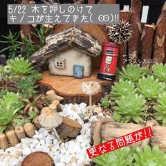 多肉棚/DIY 梅雨の合間に少しづつ…屋根つけたぁ🙌🏻 …(7枚目)