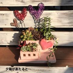 リメ鉢/DIY/多肉植物 こんなハートワイヤーも出来るって 知らせ…(7枚目)