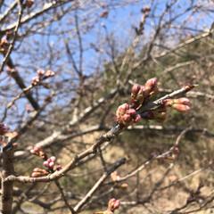 春ですね/公園へお散歩 ふきのとうとてんとう虫♡ ・・・とお花た…(2枚目)