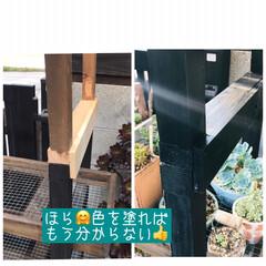 多肉棚/DIY 梅雨の合間に少しづつ…屋根つけたぁ🙌🏻 …(3枚目)