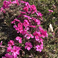 春ですね/公園へお散歩 ふきのとうとてんとう虫♡ ・・・とお花た…(5枚目)