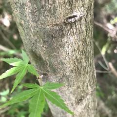 木の表情 十人十色( ¨̮ )︎︎ 木だって色んな…(8枚目)