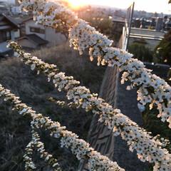 夕日とお花 今日の夕日と…(3枚目)