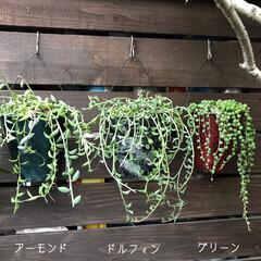 リメ缶/DIY/多肉植物 我が家のネックレス・.。*・.。* ②D…(1枚目)