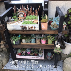 多肉棚/DIY 梅雨の合間に少しづつ…屋根つけたぁ🙌🏻 …(4枚目)