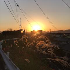 夕暮れ/ビオラ ビオラ植えました🤗黄色はパンジー。 ・・…(7枚目)