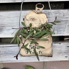 リメ缶/DIY/多肉植物 我が家のネックレス・.。*・.。* ②D…(4枚目)