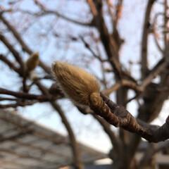 冬の姿 春が待ち遠しい(*^^*) ①②枚目は同…