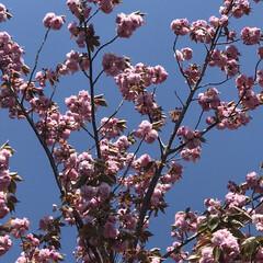 春の花/柴犬/DIY一輪挿し お花の投稿をしようと思ったら… すまして…(5枚目)
