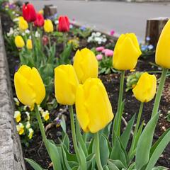 手仕事/運動不足解消/おうち/日々のこと/花壇/色とりどり/... 花壇☺︎ 4月から少しずつ草取りしながら…(3枚目)