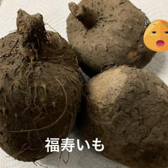 イチゴの日/福寿いも/山芋 こんばんは😊 これ何だか分かりますか❓ …(1枚目)