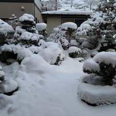 氷点下/除雪車/寒波 こんにちは^ ^ 今朝の庭です⛄️  思…