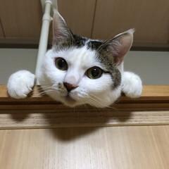 毎日の癒し/猫の日 おはようございます(=^・^=) にゃん…(2枚目)