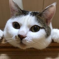 毎日の癒し/猫の日 おはようございます(=^・^=) にゃん…(1枚目)