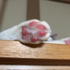 毎日の癒し/猫の日 おはようございます(=^・^=) にゃん…(3枚目)
